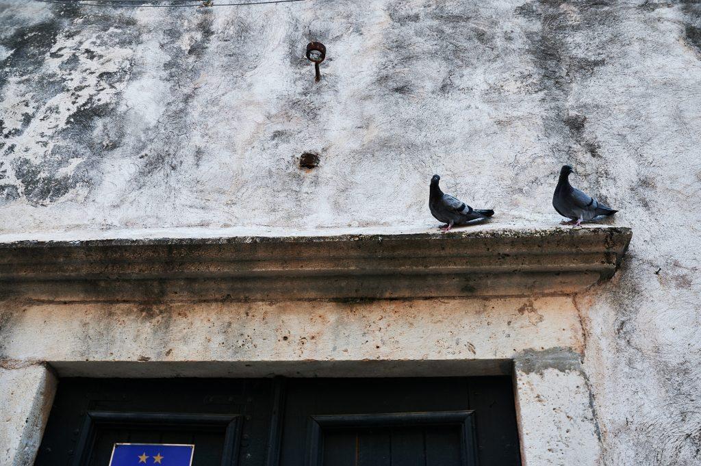 dva goluba stoje na vratima iznad apartmana s dvije zvjezdice